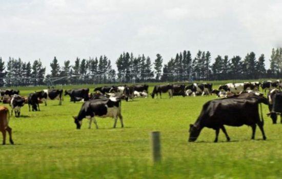 Anunț APIA pentru crescătorii de animale